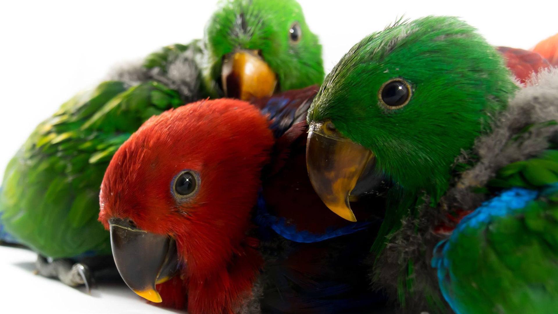 Emerald Aviaries Pet Birds Parrots