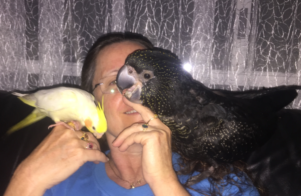 Cockatiel and Cockatoo
