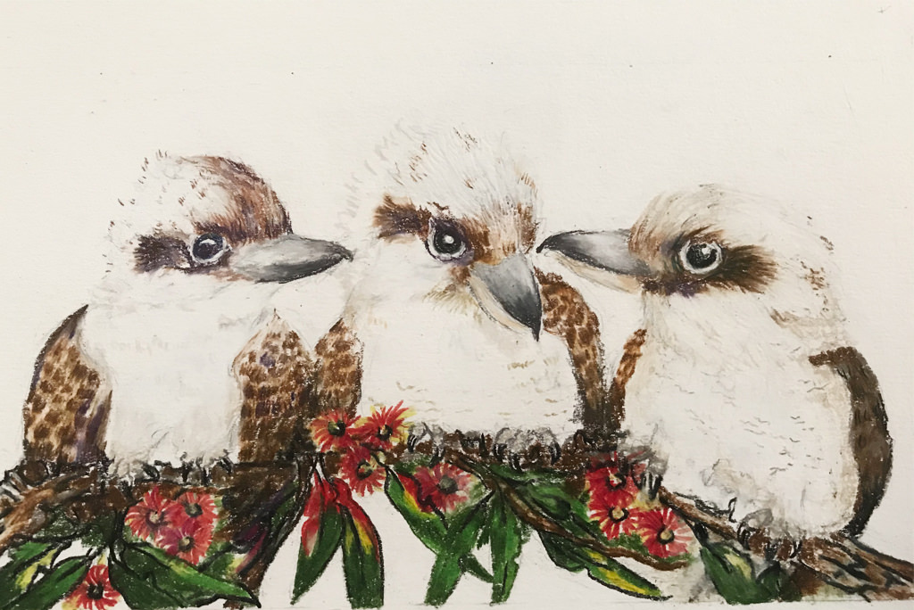 Kookaburra Drawing 3