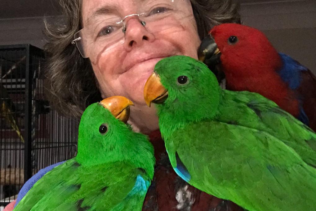 Companion Parrots
