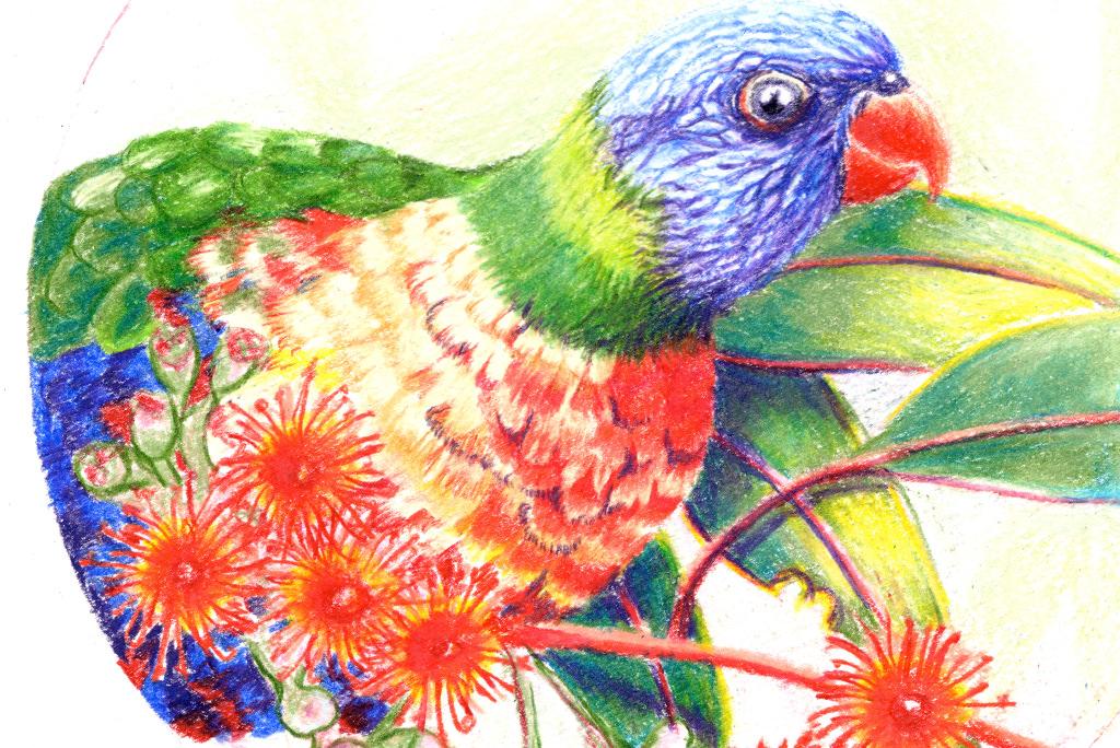 Hand Drawn Orivinal Rainbow Lorikeet